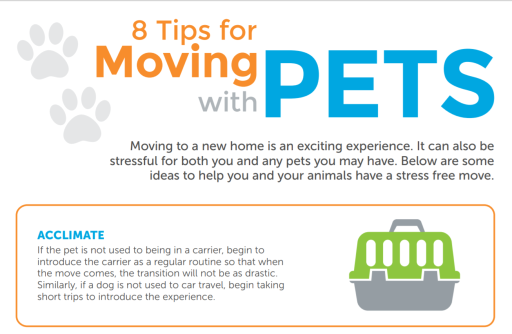 8 tips for moving with your pets